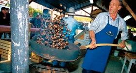 Burnjak: festa delle castagne